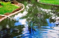 10.vodní jezírko