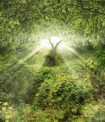 duchové zahrady