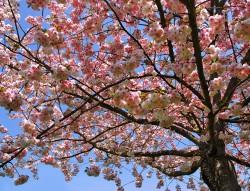 Zdravé a přirozené stromy